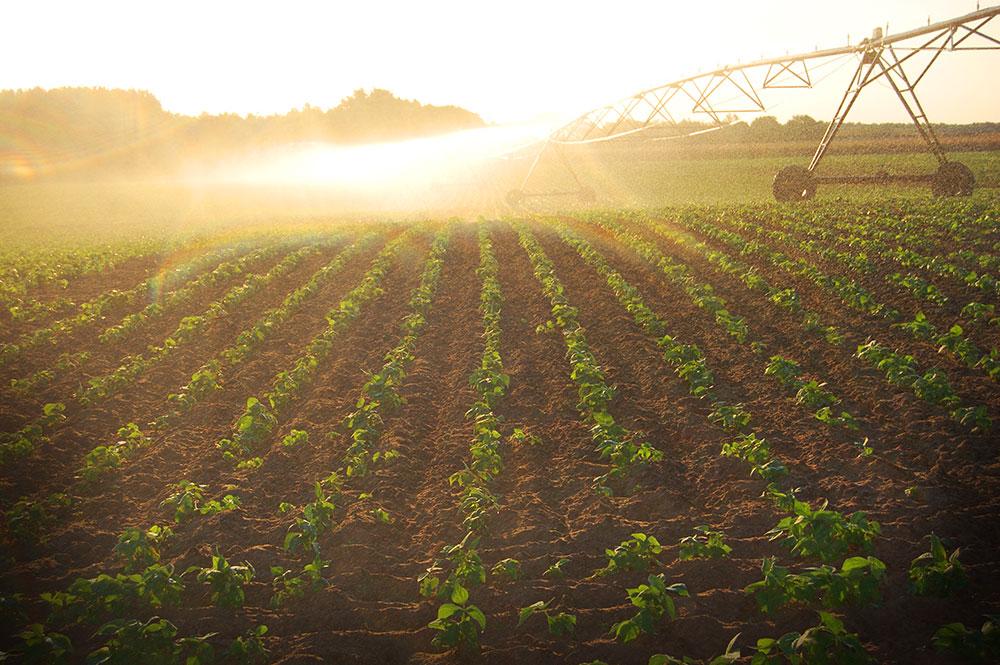 Greens Irrigation
