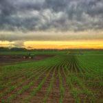 Corn Field Planting