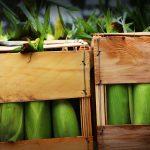 Sweet Corn Boxes