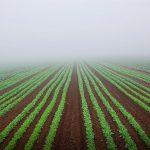 Greens Field
